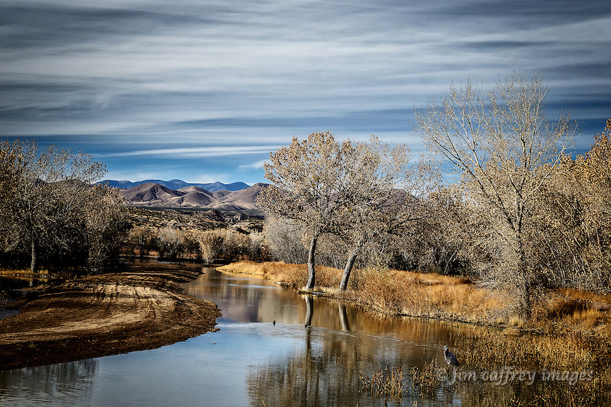 A Great Blue Heron wades in a channel at Bosque del Apache National Wildlife Refuge as two ducks swin close by.