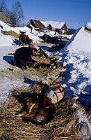 Jason Barron's Dogs Parked at McGrath Checkpoint