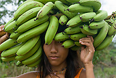 Xingu Indigenous Park, Mato Grosso State, Brazil. Aldeia Tres Irmaos (Kaiabi). Woman carrying large bunch of bananas on her head.