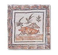 3rd century Roman mosaic panel of a boar and a sow lying down. From Thysdrus (El Jem), Tunisia.  The Bardo Museum, Tunis, Tunisia.  White background