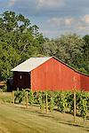 Nippenose Valley, PA. Stopper barn and vineyard. Morgan Valley Road.