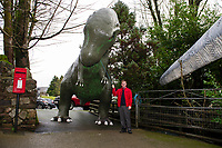 Pictured: A member of staff stands by the Dinosaur outside of Dan Yr Ogof, The National Showcaves Centre for Wales, Abercraf, Swansea, Wales, UK<br /> Re: A 15ft tall Allosaurus has become a star attraction since it arrived at the front garden of a house in Cwmbran, south Wales, with hundreds of people already stopping to get a glimpse.<br /> It was auctioned off by Dan-yr-Ogof , The National Showcaves Centre for Wales for charity and Jerry Adams was the highest bidder with an offer of £1600.<br /> Motorists couldn't believe what they were seeing when they passed the dinosaur, complete with number plate on its tail, as it was towed on a trailer around 50 miles along the M4 from the Abercrave attraction on the outskirts of Swansea to its new home.<br /> Now people are contacting the showcaves on Facebook to find out exactly where it is so they can take their kids to see the creature, which measures 30ft in length.