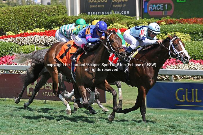 Divine Oath (KY) with jockey Javier Castellano on board wins his allowance race at Gulfstream Park.  Hallandale Beach, Florida 02-22-2014