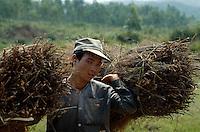 Bauer mir Reisig in Zentralvietnam, Vietnam