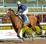 20 March 2010: Almoradi after the Appleton Stakes at Gulfstream Park in Hallandale Beach, FL.