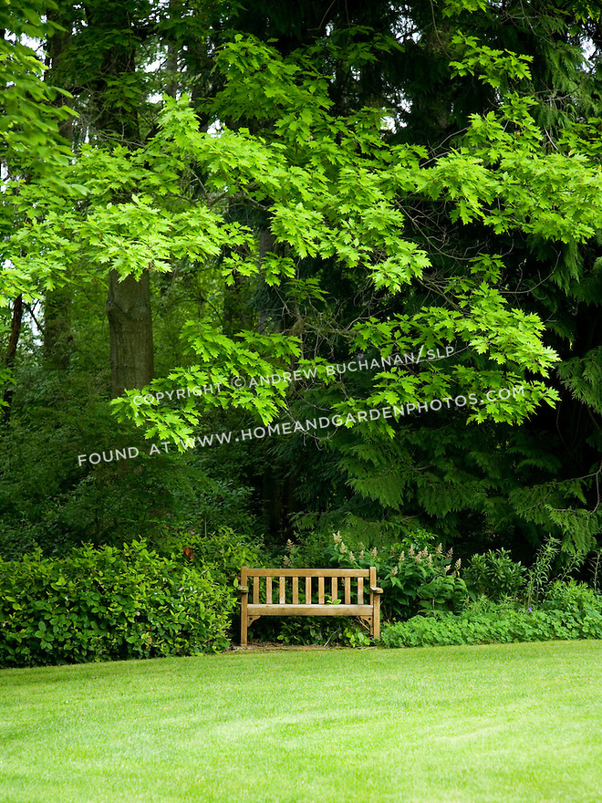 A single wooden bench sits at the edge of a manicured green lawn underneath the reaching branches of an oak tree, backed by evergreen cedars at the Dunn Gardens, a former private estate near Seattle now run as a woodland botanical garden and available for touring by appointment and fee.