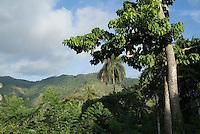 Cuban countryside showing lush vegetation between Soroa and Las Terrazas, Cuba.