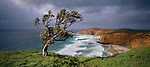 Windswept tree at Kahunene in the Chatham Islands of New Zealand.