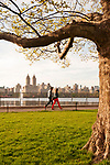People run and walk along the Shuman Running Track, lined with trees full of cherry blossoms; the track goes around the reservoir in Central Park