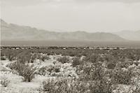 Freight train crossing Mohave desert