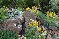 Rocks to mimic cliffs in David Salman New Mexico xeric rock garden with Hymenoxis acaulis, Angelita daisy