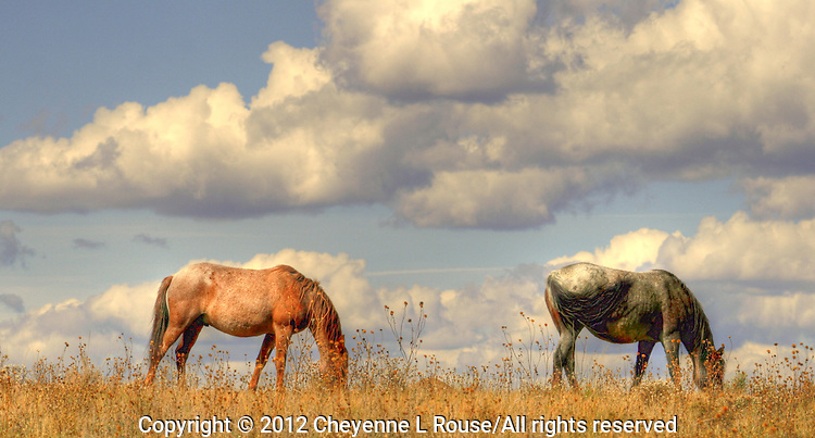 Rescued wild mustangs on the Monero Mustang Sanctuary in Tierra Amarillas New Mexico - they roam free on 5,000 acres.