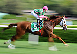 16 August 2008: Presious Passion takes the early lead in the Sword Dancer Invitational at Saratoga Race Course in Saratoga Springs, New York.  Grand Couturier went on to win the Grade 1, $500,000 event.