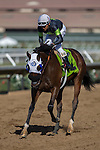 DEL MAR,CA-SEPTEMBER 03: Bowies Hero,ridden by Rafael Bejarano,wins the Del Mar Juvenile Turf at Del Mar Race Track on September 03,2016 in Del Mar,California (Photo by Kaz Ishida/Eclipse Sportswire/Getty Images)