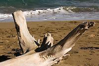 Dominikanische Republik, Strandgut am Strand zwischen Sosua und Cabarete an der Nordküste