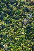 Palmiers chambeyronnia