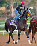 October 26, 2014:  Living the Life, trained by Gary Mandella, exercises in preparation for the DraftKings Breeders' Cup Filly & Mare Sprint or Turf Sprint at Santa Anita Race Course in Arcadia, California on October 26, 2014.Scott Serio/ESW/CSM