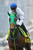 7 December 2017, Hong Kong - Once in a Moon during track work prior to the Longines Hong Kong International Races at Sha Tin Racecourse in Hong Kong. Photo Sydney Low