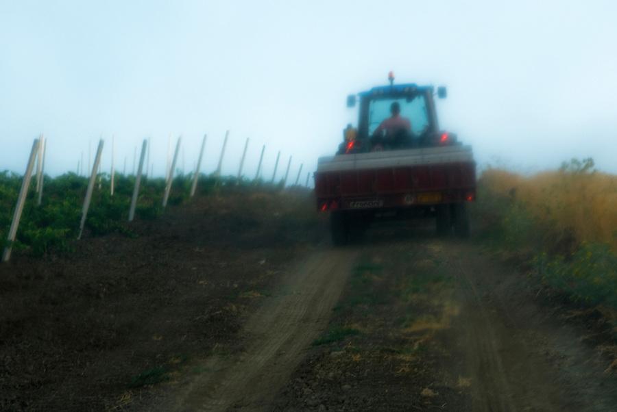 Working in the CentoPassi vineyard at Contrada Verzanica. / Il lavoro nella vigna dei Centopassi, presso la contrada Verzanica.