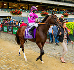 """OCTOBER 6, 2018 : Casa Creed in post parade of the """"Win & You're In"""" Champagne Stakes on Champagne Stakes Day at Belmont Park on October 6, 2018 in Elmont, NY.  Sue Kawczynski/ESW/CSM"""