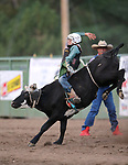 Brendan Webb competes in the steer riders portion of the 5th Annual Carson City Bulls, Broncs & Barrels event at Fuji Park, in Carson City, Nev., on Saturday, July 29, 2017. <br /> Photo by Cathleen Allison/Nevada Photo Source