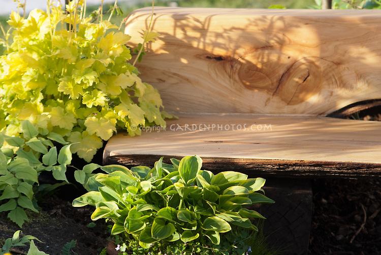 Garden Bench made of sustainable wood, mounding plant Heuchera Lime Rickey, with Hosta at base