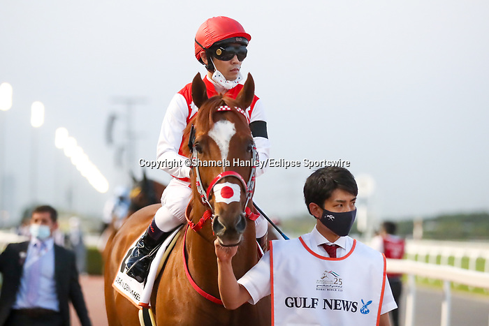 March 27, 2021: MATERA SKY, #8 in the post parade for the Golden Shaheen on Dubai World Cup Day, Meydan Racecourse, Dubai, UAE. Shamela Hanley/Eclipse Sportswire/CSM