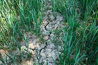 Drainage & Soils