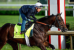 LOUISVILLE, KY - MAY 02: Shagaf, trained by Chad Brown and owned by Shadwell Stable, exercises and prepares during morning workouts for the Kentucky Derby and Kentucky Oaks at Churchill Downs on May 2, 2016 in Louisville, Kentucky. (photo by Scott Serio/Eclipse Sportswire/Getty Images)