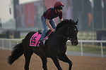 DUBAI,UNITED ARAB EMIRATES-MARCH 23: Spirit of Valor,trained by Aidan O'Brien,exercises in preparation for the UAE Derby at Meydan Racecourse on March 23,2017 in Dubai,United Arab Emirates (Photo by Kaz Ishida/Eclipse Sportswire/Getty Images)