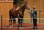 September 15, 2015: Hip #245 Medagilia d'oro - Easter Bunnette colt consigned by Mill Ridge Sales.  Candice Chavez/ESW/CSM