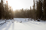 Snowfall in boreal forest in winter, Riding Mountain National Park, Manitoba, Canada