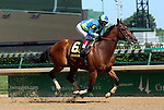 May 31, 2014: Delauney, a 7 year old gelding riddeny by Rosie Napravnik, wins the G3 Aristides Stakes easily by 3 1/2 lengths.  He is owned by Maggi Moss and trained by Tom Amoss.  Mary M. Meek/ESW/CSM