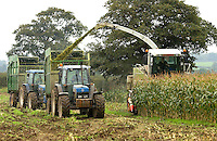 Contractors Tomlinson Bros. from Broxton, Cheshire finishing off a  field of PR39 maize on C. Whittingham and Son's Mill Farm, Huxley, Chester. The 15 acre crop will be used as part of the winter ration for the 180 head of dairy stock on the farm.