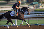 OCT 27 2014:Pants On Fire, trained by Kelly Breen, exercises in preparation for the Breeders' Cup Dirt Mile at Santa Anita Race Course in Arcadia, California on October 27, 2014. Kazushi Ishida/ESW/CSM