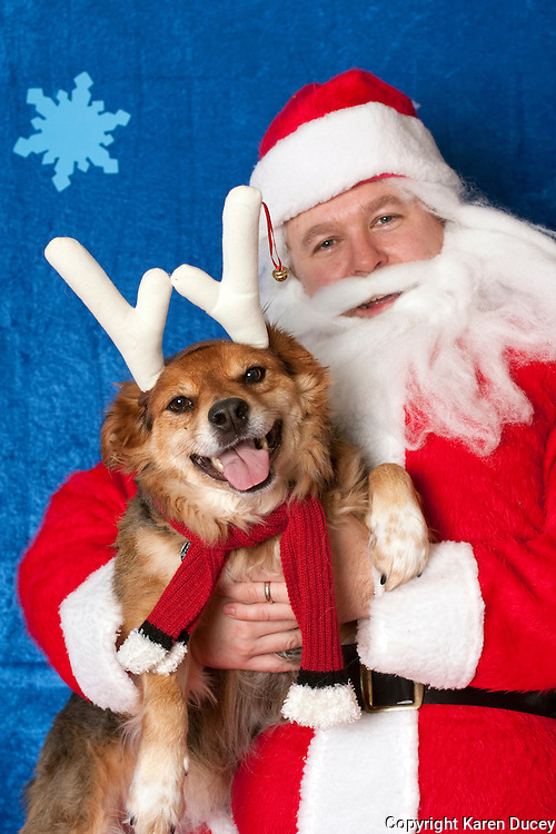 Cookie poses for a holiday photo with Santa at Pet Pros in Redmond, WA to help raise money for Dogs Deserve Better on December 11, 2010. (photo by Karen Ducey)