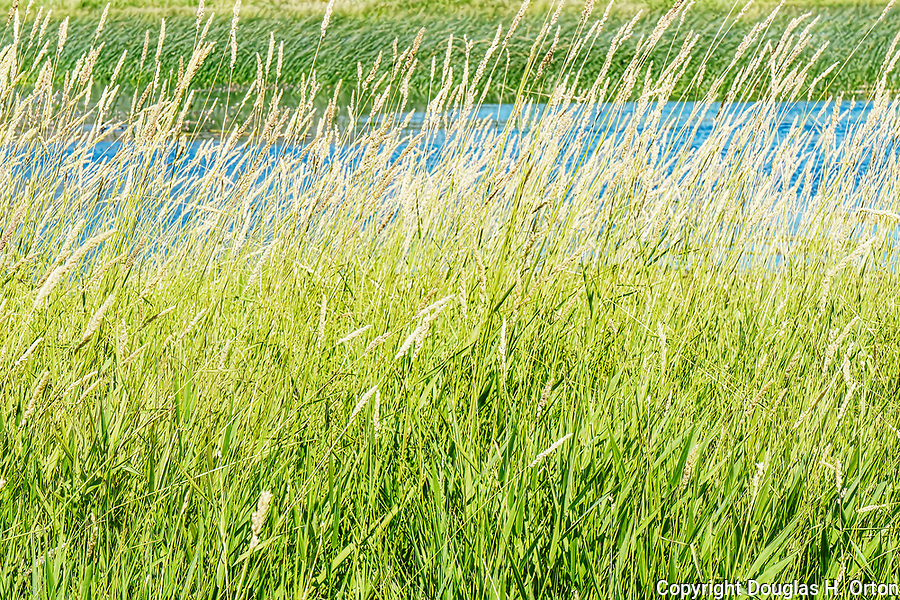 Lakeside grasses bend in wind.  Big Twin Lake, Winthrop, WA, USA, just off State Route 20 North Cascades Highway.