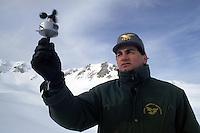 Forestali mentre controllano le condizioni della neve e del ghiaccio per la prevenzione delle valanghe..Forestry while control the conditions of snow and ice for the prevention of avalanches....