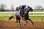 November 5, 2020: Collusion Illusion, trained by trainer Mark Glatt, exercises in preparation for the Breeders' Cup Sprint at Keeneland Racetrack in Lexington, Kentucky on November 5, 2020. Dan Heary/Eclipse Sportswire/Breeders Cup/CSM