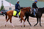 LOUISVILLE, KY -APR 25: Kentucky Derby hopeful Good Magic goes to the track to train for the Kentucky Derby at Churchill Downs, Louisville, Kentucky. (Photo by Mary M. Meek/Eclipse Sportswire/Getty Images)