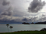 Isolated palms and storm clouds, Lord Howe Island