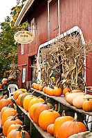Autumn farm stand with pumpkins, Connecticut, CT, USA