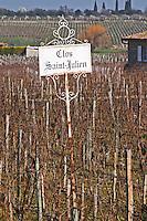 Vineyard. Clos Saint Julien, Saint Emilion, Bordeaux, France
