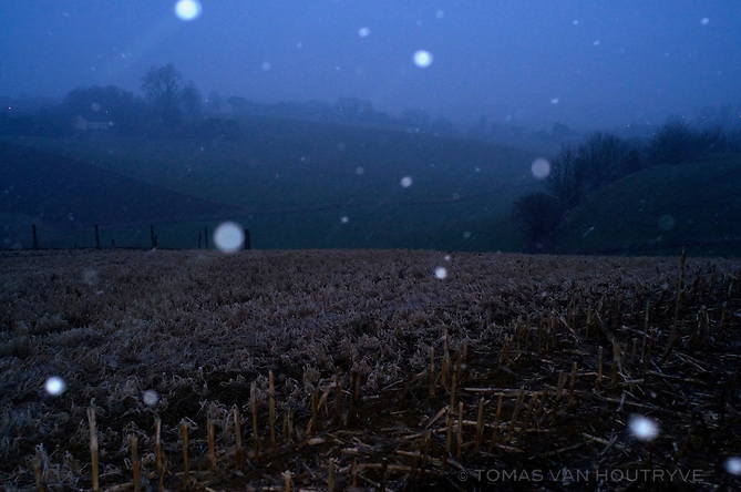 Snow flakes fall in a field in Overijse, Belgium on March 28, 2013.