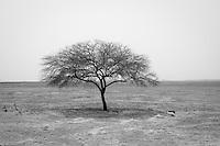 Lone Acacia tree near Ndiael, Senegal