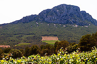 Domaine de l'Hortus. The Pic St Loup mountain top peak. Pic St Loup. Languedoc. France. Europe.