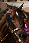 """DEL MAR, CA  JULY 28: #1 La Force,  shows her game face before the Clement L Hirsch Stakes (Grade 1) a Breeders' Cup """"Win and You're In"""" Distaff Division (Photo by Casey Phillips/Eclipse Sportswire/CSM)"""