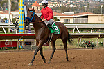 DEL MAR, CA  AUGUST 10:  #5 Collusion Illusion, ridden by Joseph Talamo, returns to the connections after winning the Best Pal Stakes (Grade ll) on August 10, 2019 at Del Mar Thoroughbred Club in Del Mar, CA. (Photo by Casey Phillips/Eclipse Sportswire/CSM)