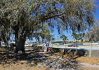 Cars race past an Oak Tree draped with Spanish Moss during the 12 Hours of Sebring, Sebring, FL, MArch 20, 2010.  (Photo by Brian Cleary/www.bcpix.com)