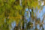 Underwater trout 2010, spring creek